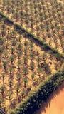 Green farm. A farm in the desert stock photos
