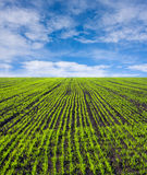 Green farm field Royalty Free Stock Images