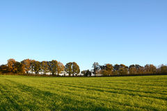 Green farm field edged by fall trees Royalty Free Stock Photo