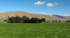 Green Farm Land. New Zealand is a bless country with our rich green farm land we have Royalty Free Stock Photography