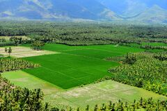 Free Green Farm Land Surrounding With Mountain And Coconut Trees Royalty Free Stock Photography - 194747517