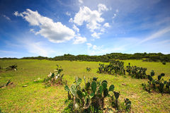 Green farming field on hills Royalty Free Stock Photography