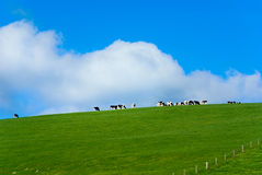 Green farmland Stock Photography