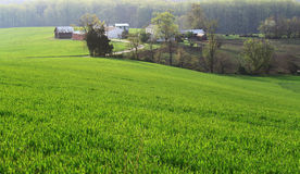 Green Farmland Royalty Free Stock Image