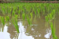 Green farmland Stock Image