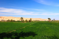 Green farmland and desert mountains in Luxor, Egypt stock photography