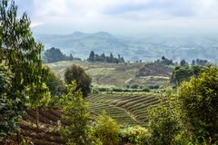 Green farmland fields landscape in Virunga volcano national park. Rwanda Stock Photo