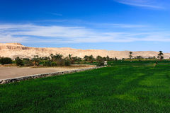 Green farmland gives way to sandy desert. Green crops give way to sandy desert in the city of Luxor. The ancient Hatshepsut Temple visible in the background stock photos