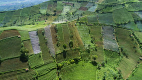 Green farmland with terraced system Stock Photography