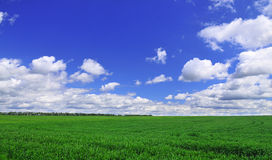 Green feald. The green field and white cloud royalty free stock photography