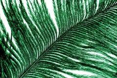 Green feathe Stock Photo