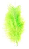 Green feather Royalty Free Stock Photo