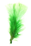 Green feather. On white background Stock Photography