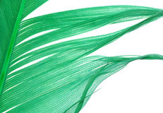 Green feather abstract texture Stock Images