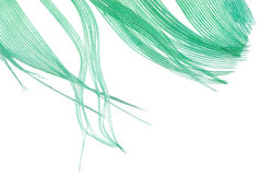 Green feather abstract texture Royalty Free Stock Image