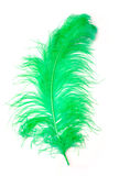 Green Feather of an ostrich Royalty Free Stock Photos