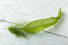 Green feather on rustic wood. Small green feather lying on a white painted piece of wood with copy space Stock Photo