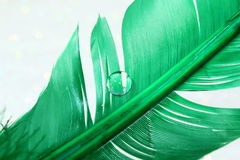 Green Feather. A vibrant green feather with a clear water drop royalty free stock image