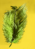 Green feather. On a yellow background Royalty Free Stock Photography