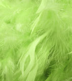 Green feathers. Background with green feathers - macro image Royalty Free Stock Photography