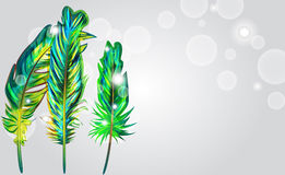 Green feathers stock illustration