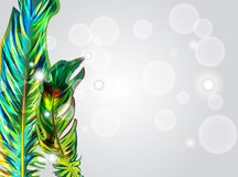 Green feathers Royalty Free Stock Photography