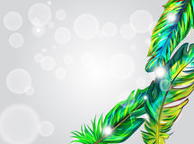 Green feathers royalty free illustration
