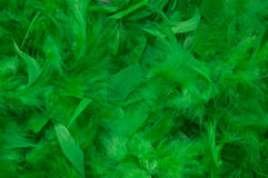Green Feathers. Abstract background of green feather Stock Photos