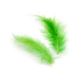 Green feathers stock image