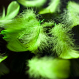 Green feathers Royalty Free Stock Image