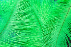 Green feathers. Abstract background of green ostrich feathers on closeup Stock Photos