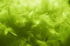 Green feathers background - stock photo. Green feathers background - lime feather abstract wallpaper Royalty Free Stock Photography