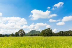 Green feild with clear sky and mountain background Royalty Free Stock Photos