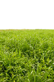 Green Feilds Royalty Free Stock Image