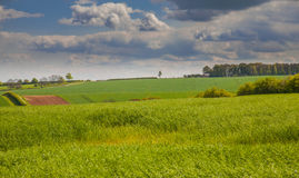 Green feilds in the lincolnshire wolds Royalty Free Stock Photography