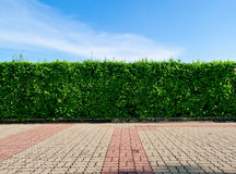 Green fence. Wall sky background Stock Image