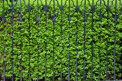 Green fence Royalty Free Stock Image