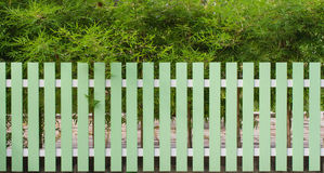 Green fence and bamboo tree. In background Royalty Free Stock Image