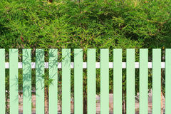 Green fence and bamboo tree. In background Stock Photos