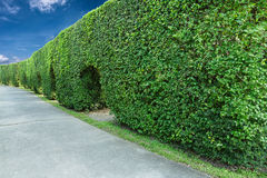 Green fence and cement walkways. With blue sky and cloud as background Royalty Free Stock Photos