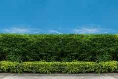 Green fence with green lawn Stock Image