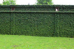 Green fence Royalty Free Stock Images