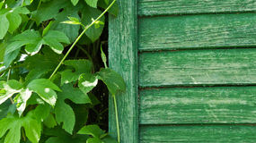 Green fence and plant Royalty Free Stock Photography