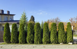 Green fence of trees Royalty Free Stock Photography