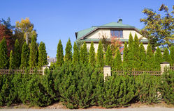 Green fence of trees and shrubs Stock Images