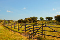 Green fenced fields in a farm. Sunny day. Royalty Free Stock Photography