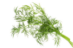 Green Fennel Leaf Isolated Royalty Free Stock Image