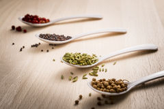 Green fennel seeds Stock Image