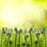 Green ferm sprouts under sun Royalty Free Stock Photo