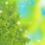 Green fern. Fern with green background and bokeh Royalty Free Stock Images